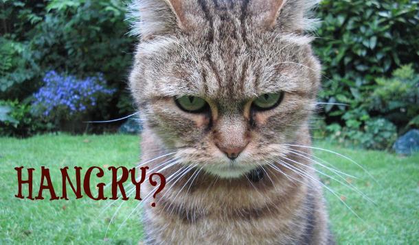 hangry cat